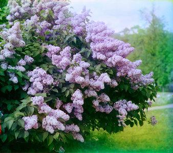 чтобы цветение было пышным