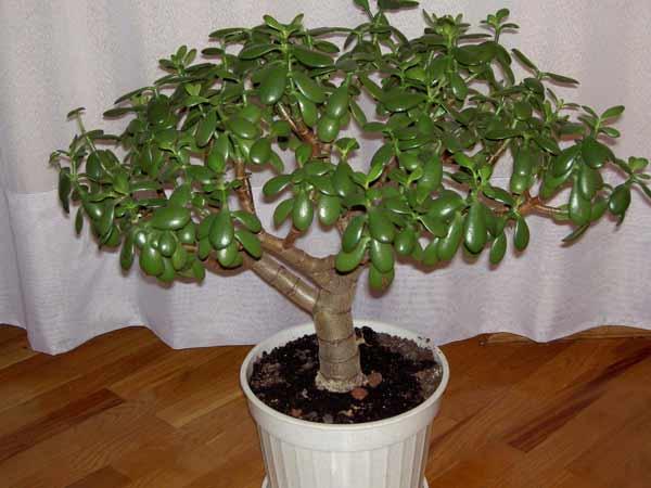 Как сделать цветущее дерево фото 976