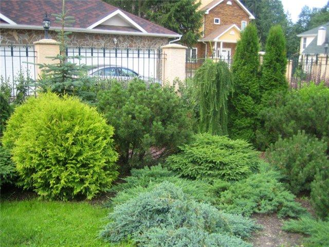 Выращивание хвойных растений
