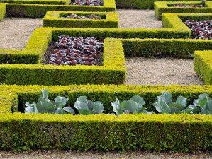 Как высевать овощи на французском огороде