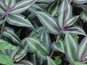 надёжное средство против щитовки на комнатных растениях