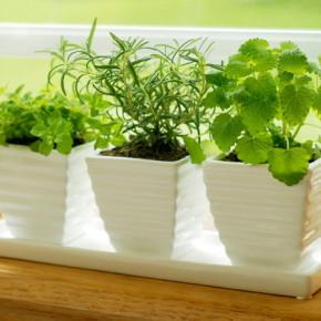 Овощи на подоконнике:выращивание в домашних условиях