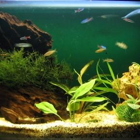 Где лучше купить компрессор для аквариума