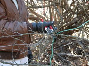 о правильной обрезке деревьев