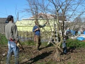 Как заменить обрезку деревьев на плодоношение