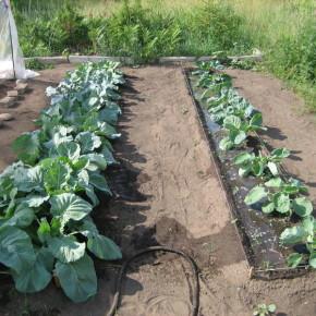 Что делать,чтобы  органические удобрения не загнивали?