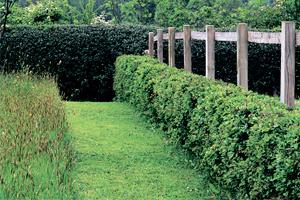 как можно задекорировать забор