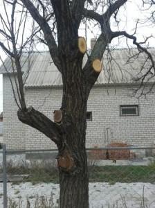 Когда формировать кроны плодовых деревьев