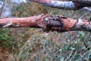 Как предотвратить распространение грибковых инфекций в саду