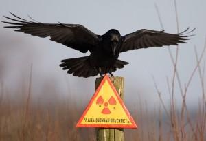 радиации на селе