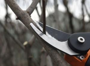 Формирование и обрезка кроны плодовых деревьев