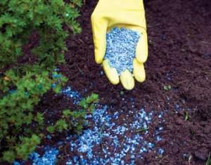 Как правильно вносить минеральные удобрения?