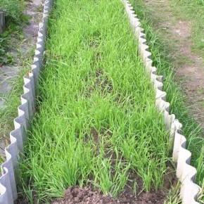 Как устроить экологический огород на даче?