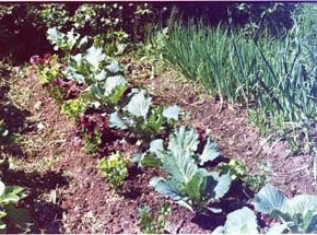 Выращивать растение без химии трудно и экономически невыгодно?