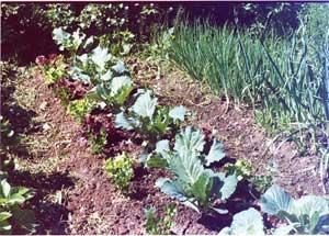 Выращивать растение