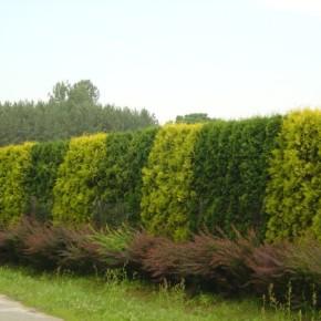 Как превраттить простую бетонную ограду в красивую часть садового участка?
