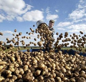 В чем преимущества  семян НПП «Агро-Ритм»?