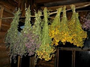 Лекарственные травы в Украине