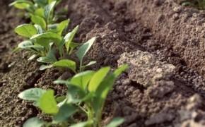 Микробиологические препараты-помощь для органических удобрений