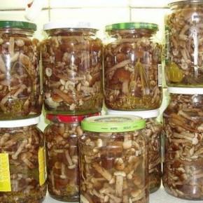 Простой рецепт маринованых грибов