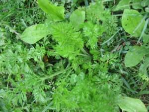 Жидкий компост из травы