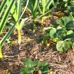 Как получить очень хороший урожай с маленького участка земли