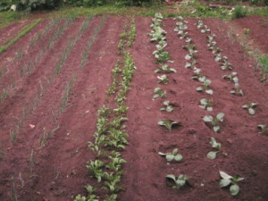 органическом земледелии