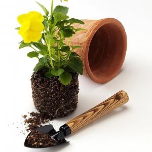Как обеспечить комнатным растениям хорошие условия для произростания