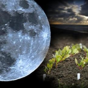 Благоприятные дня для посева овощей в мае 2016 по лунному посевным календарем