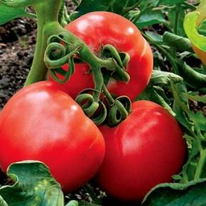Благоприятные дни для посева помидор в феврале-марте 2018 года