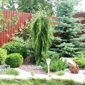 Как вырастить декоративный сад?