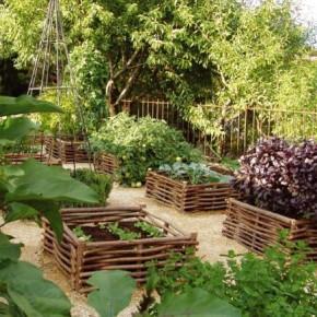 Дачный участок:как питаются растения