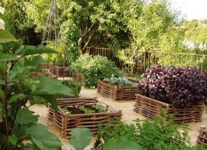 Почему замедляется рост растений