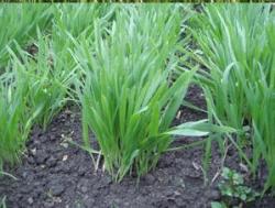 Что делать,если огород в низинах