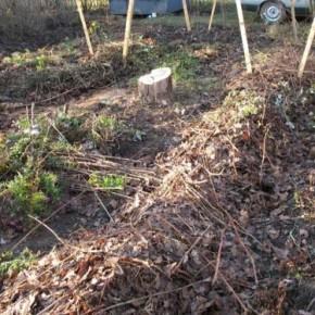 Подготовка почвы к весенней посадке осенью