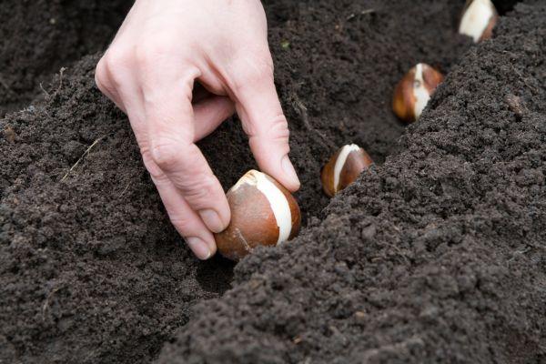 Благоприятные дни для посева и