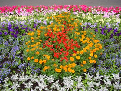 Как подкармливать цветник в октябре