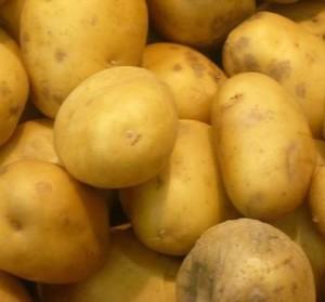 с сортами картофеля украинской селекции