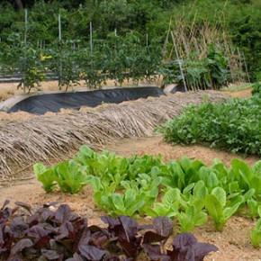Органические удобрения вносят вместе с минеральными