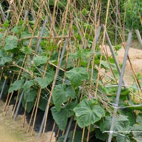 Чего не хватает растениям на черноземных почвах?