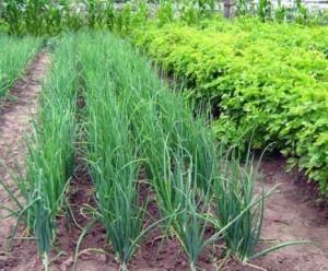 Когда нужно подкармливать растения калийными удобрениями