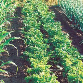 Где устроить огород:работа на приусадебном участке