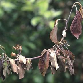 Как правильно поливать плодовые деревья?