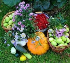 Основные работы в сентябре на огороде
