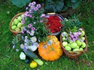 Что надо делать в саду осенью
