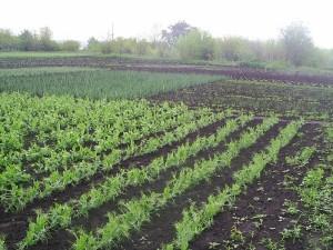 Какую роль играет органика в плодородии почвы