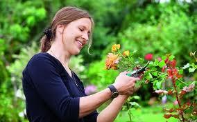 Какие цветы можно размножать и пересаживать в начале сентября