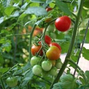 Нужно ли выращивать овощи на приусадебном участке?