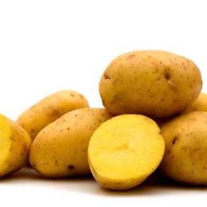 Полесский источник -сорт картофеля украинской селекции