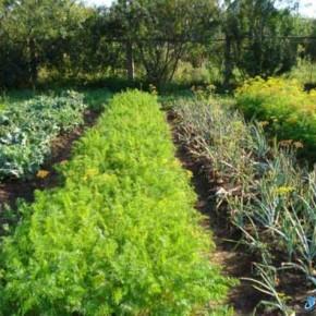 Когда нужно подкармливать растения калийными удобрениями?